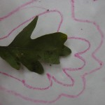 Tracing Leaves for Pre-Writing