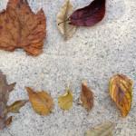 Autumn Leaf Arithmetics