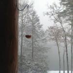 bird feeder made at home