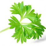 5 Health Benefits of Eating Parsley