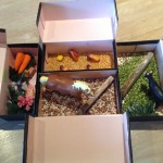 Farm in a Shoe Box