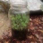 Edible Soil study