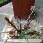 plant a forest activity