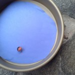 Science Experiment For preschool: Planets on the Move
