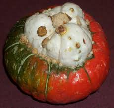 turban pumpkin