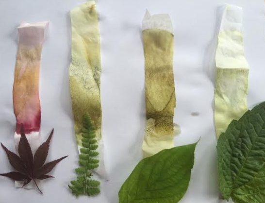 Pigments In Plants Experiment Healthy Mama Info