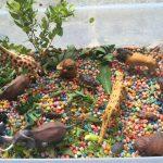 wild-jungle-sensory-tub