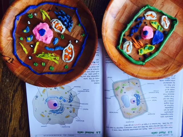 Play Dough Cell Model | Healthy Mama Info
